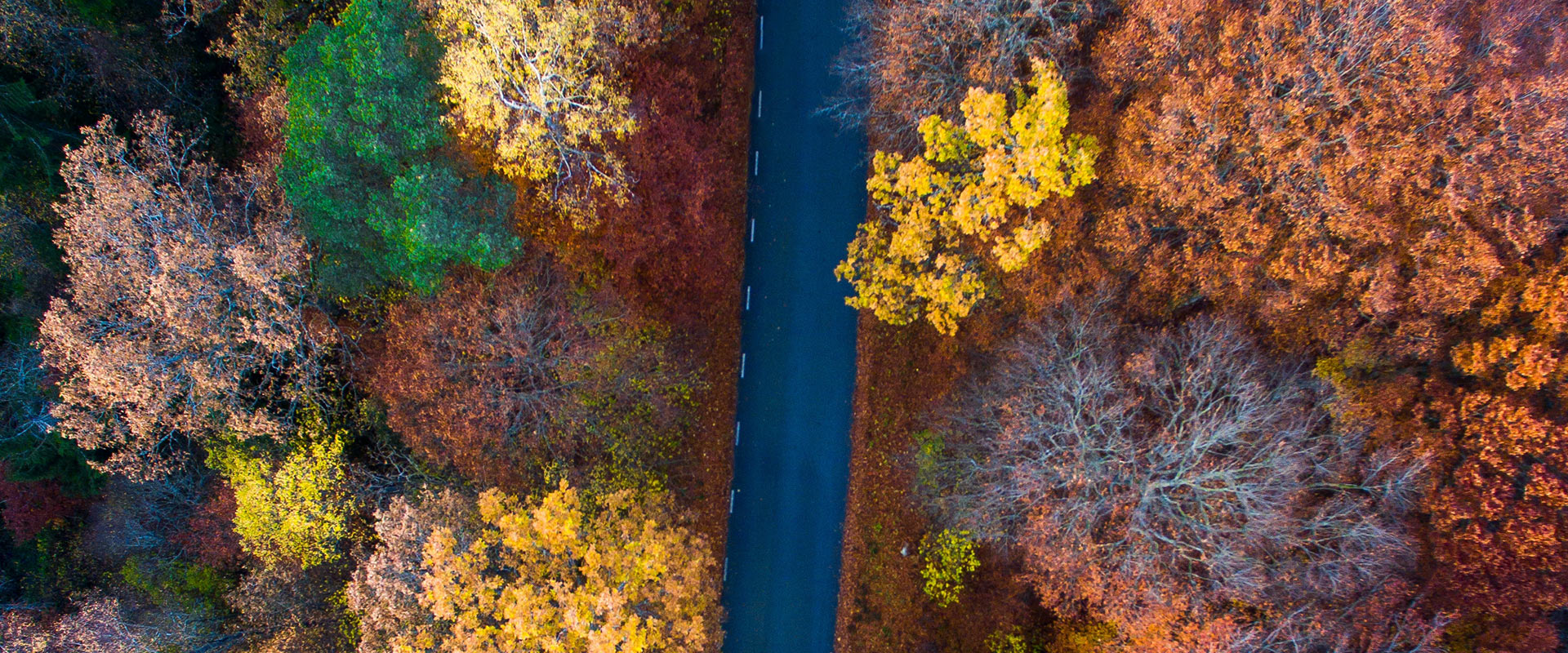 Fall drive through forest